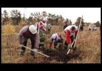 В Иркутской области продолжается восстановление лесов