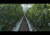 Шестьсот восемьдесят тысяч тонн зерна намолотили аграрии Иркутской области