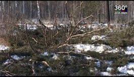 В цифровой формат переходит лесной комплекс Иркутской области